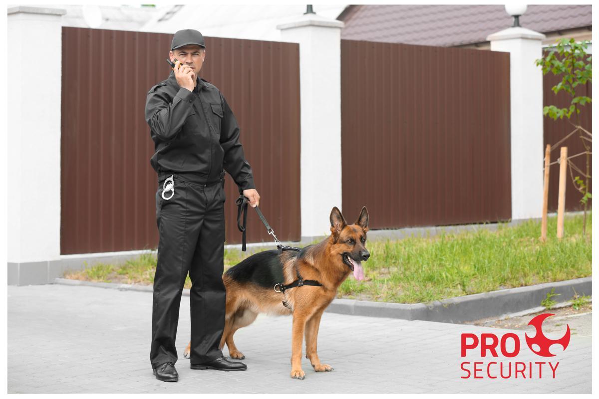 Vigilância com cães: saiba como funciona e suas vantagens