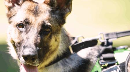 Serviço de Vigilância com Cães